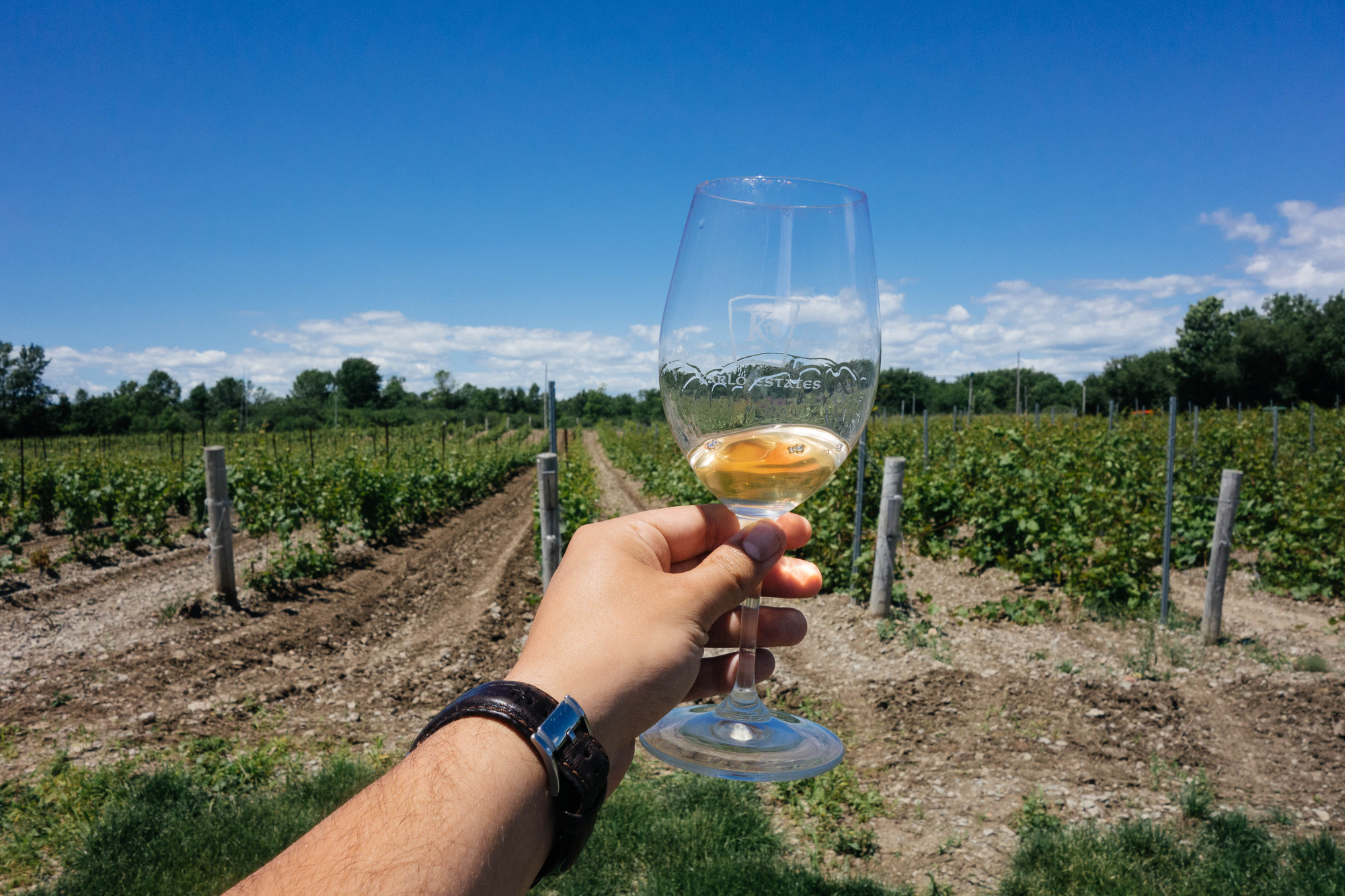 Prince Edward County is Ontario's fourth and newest Designated Viticultural Area. That deserves a toast, no? (The Great Waterway)