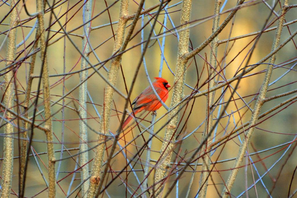 SpringBirding_FlickrPeterMiller