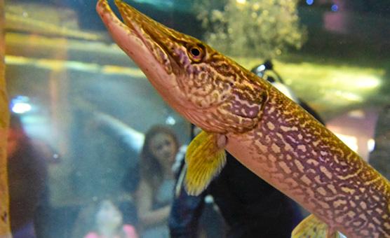 brockville-aquatarium-aquaria