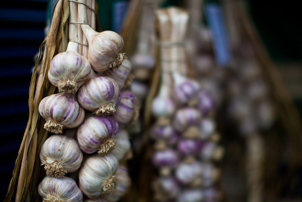 garlic bulbs at the Eastern Ontario Garlic Festival, one of the food festivals on this list.