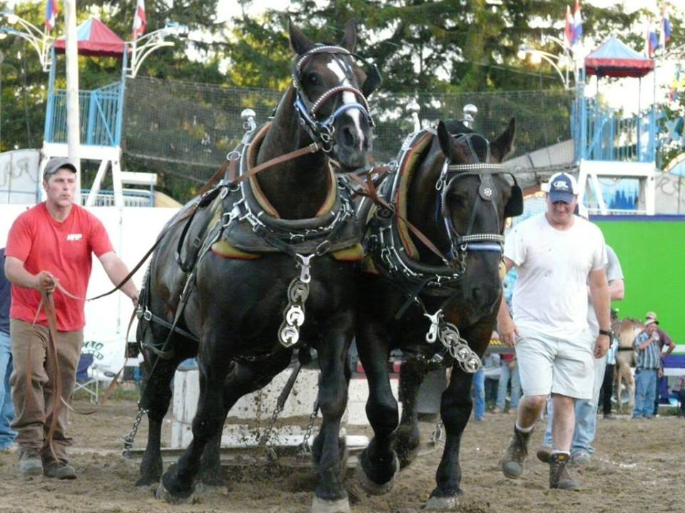 Two men guide two horses as they plow a dirt field at the Williamstown Fair.