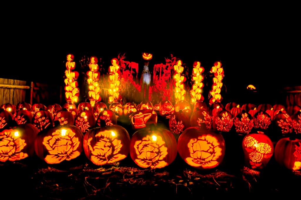A scarecrow in the background with intricately carved jack-o-lanterns in the foreground at Pumpkinferno.