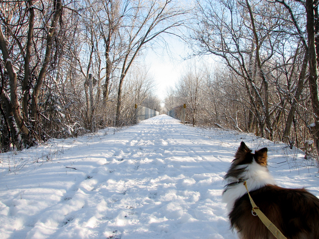 Don't forget your four-legged friend when you head out to the Cataraqui Trail. (photo: boubbou1 via Flickr Creative Commons)