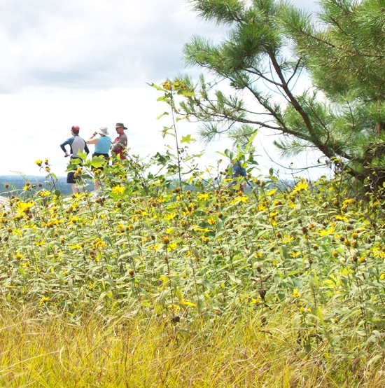 Three people surrounded by yellow wildflowers on Blue Mountain, Charleston Lake