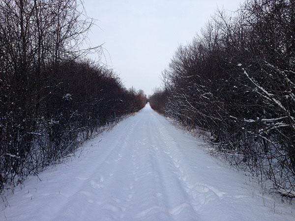The Millennium Trail is an old railway line, so the terrain is quite flat.